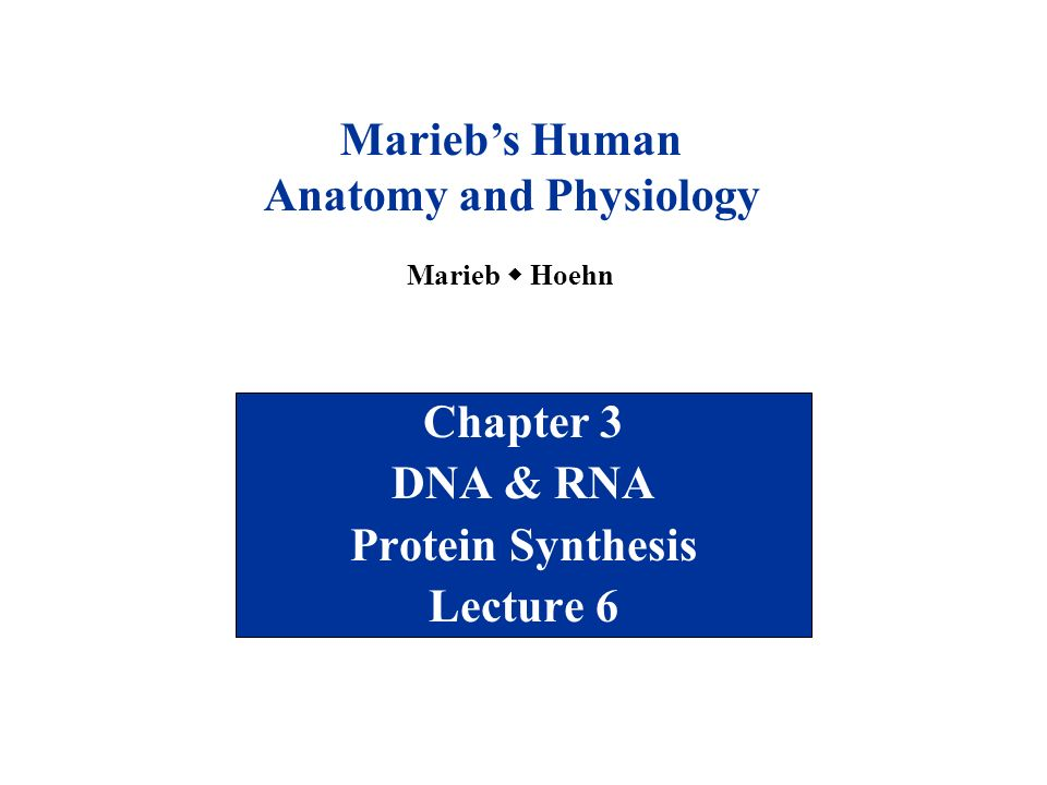 Chapter 3 DNA & RNA Protein Synthesis Lecture 6 - ppt video online ...