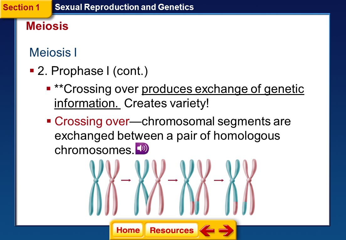 Meiosis I 2. Prophase I (cont.)