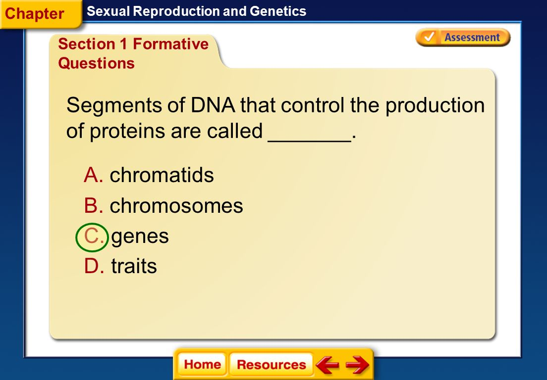 Segments of DNA that control the production