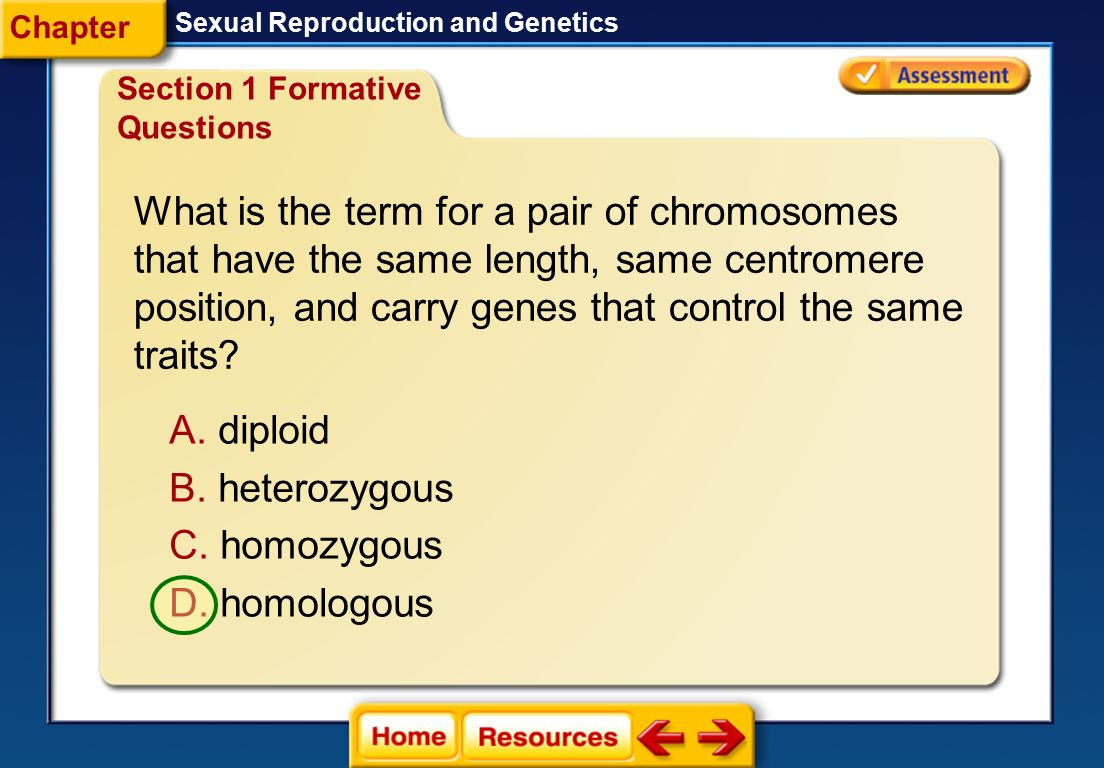 What is the term for a pair of chromosomes