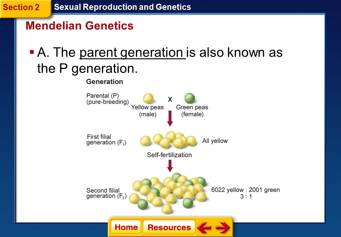 A. The parent generation is also known as the P generation.