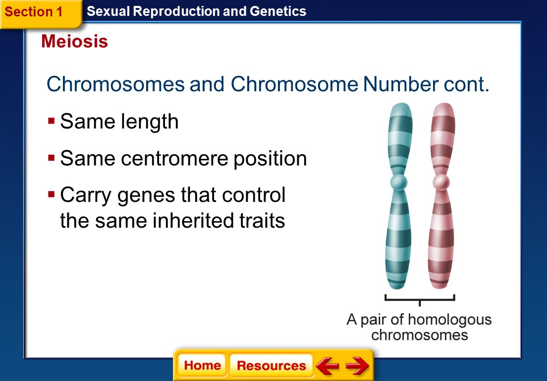Chromosomes and Chromosome Number cont.