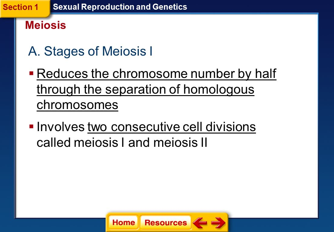 Section 1 Sexual Reproduction and Genetics. Meiosis. A. Stages of Meiosis I.