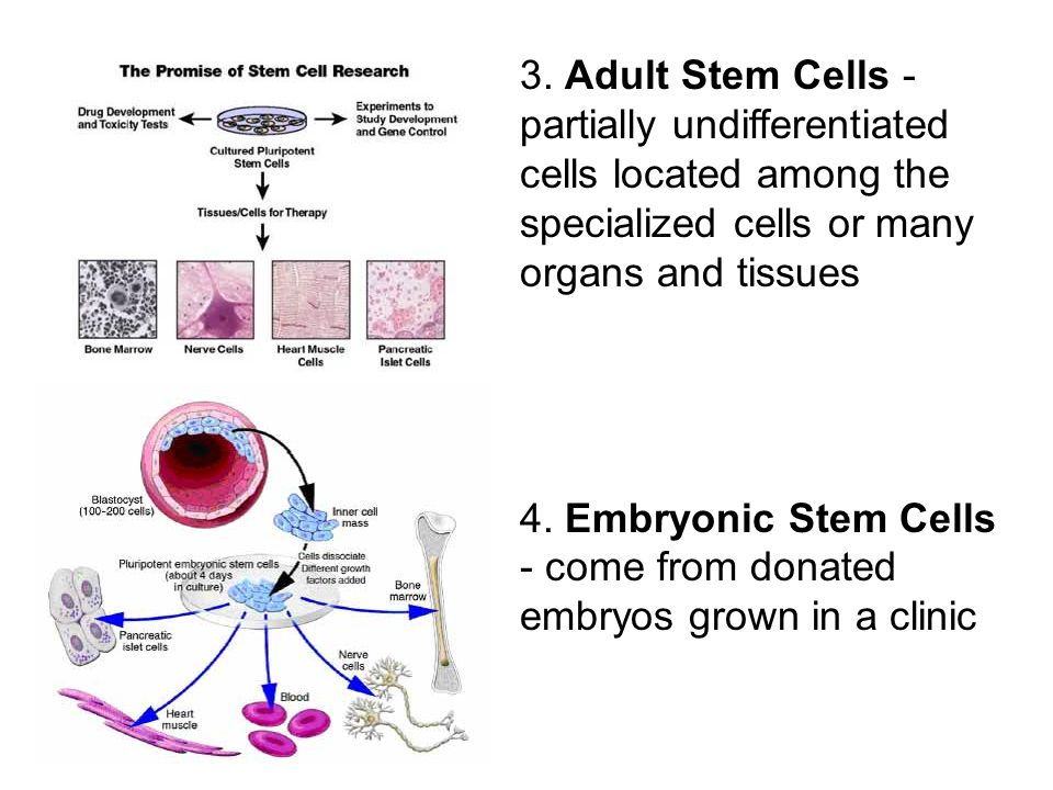 embryonic stem cell research sacrificing for Fact sheet on embryonic stem cell research news sacrificed without consent: taking from the it is never ethically correct to sacrifice the life of one human.