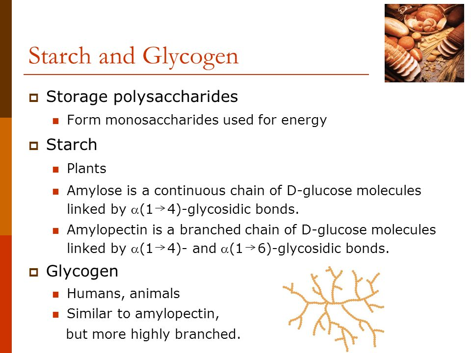 Starch and Glycogen Storage polysaccharides Starch Glycogen