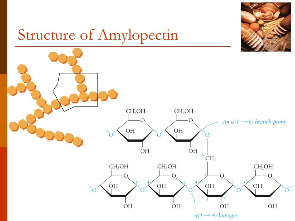 Structure of Amylopectin