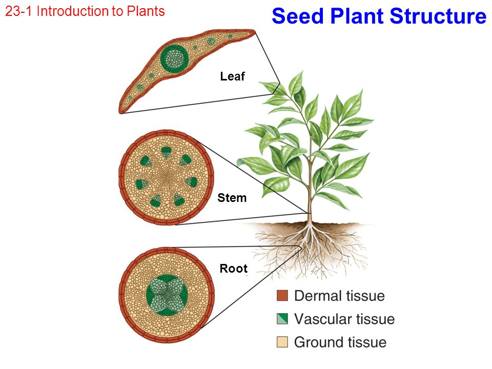 seed structure and function pdf