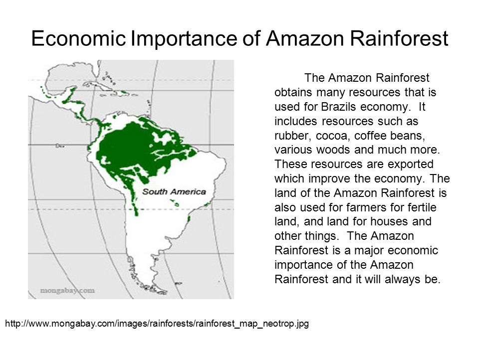 importance of rainforest preservation Conservation international is working to ensure the world's most important forests are protected for future generations.