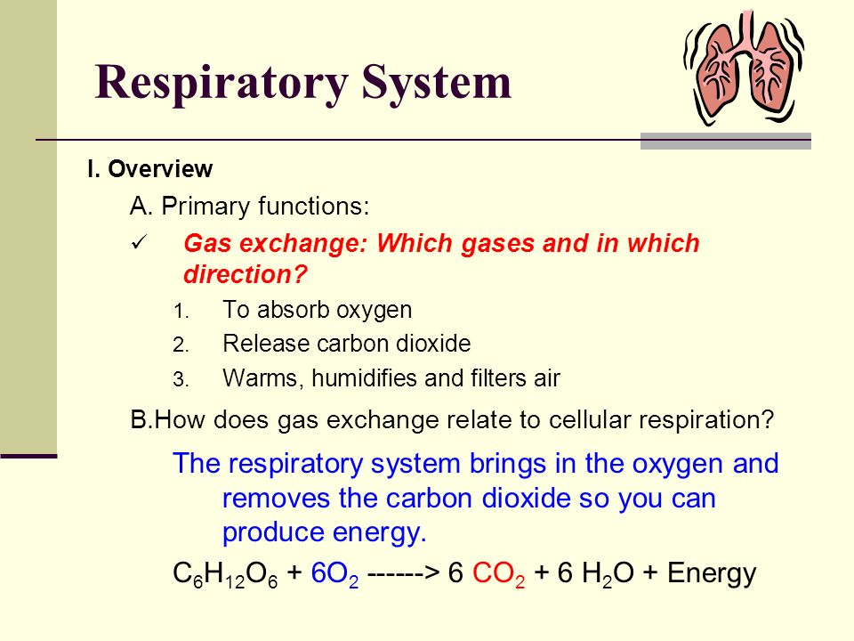 Respiratory System I. Overview. A. Primary functions: Gas exchange: Which gases and in which direction