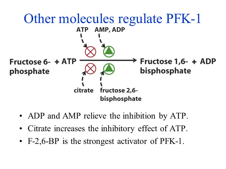 allosteric activator of pfk