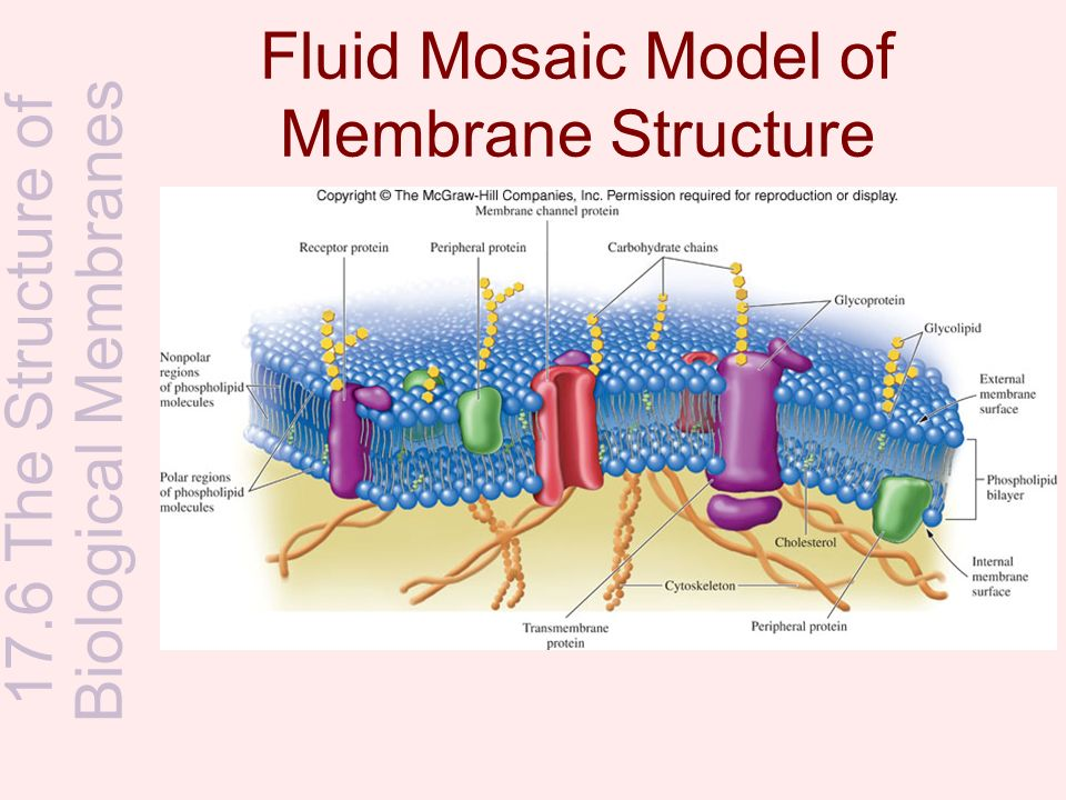 membranes and their functions essay An essay on basement membranes and their involvement in cancer important functions are ascribed to basement membranes by virtue.