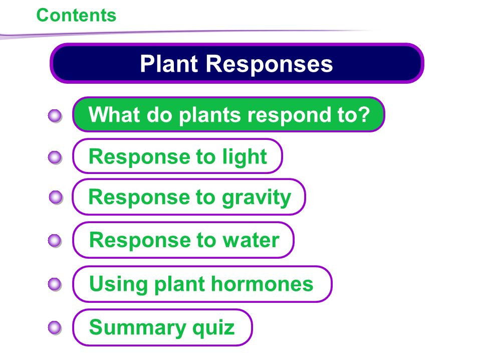 Plant Responses What do plants respond to? Response to light - ppt ...