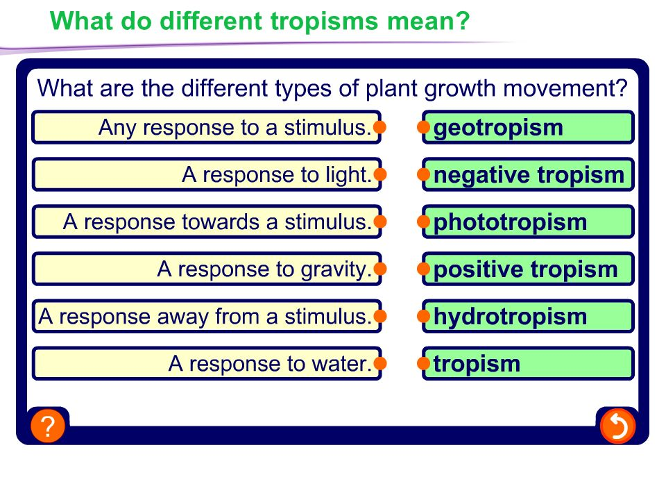 plant responses what do plants respond to response to light ppt video online download. Black Bedroom Furniture Sets. Home Design Ideas