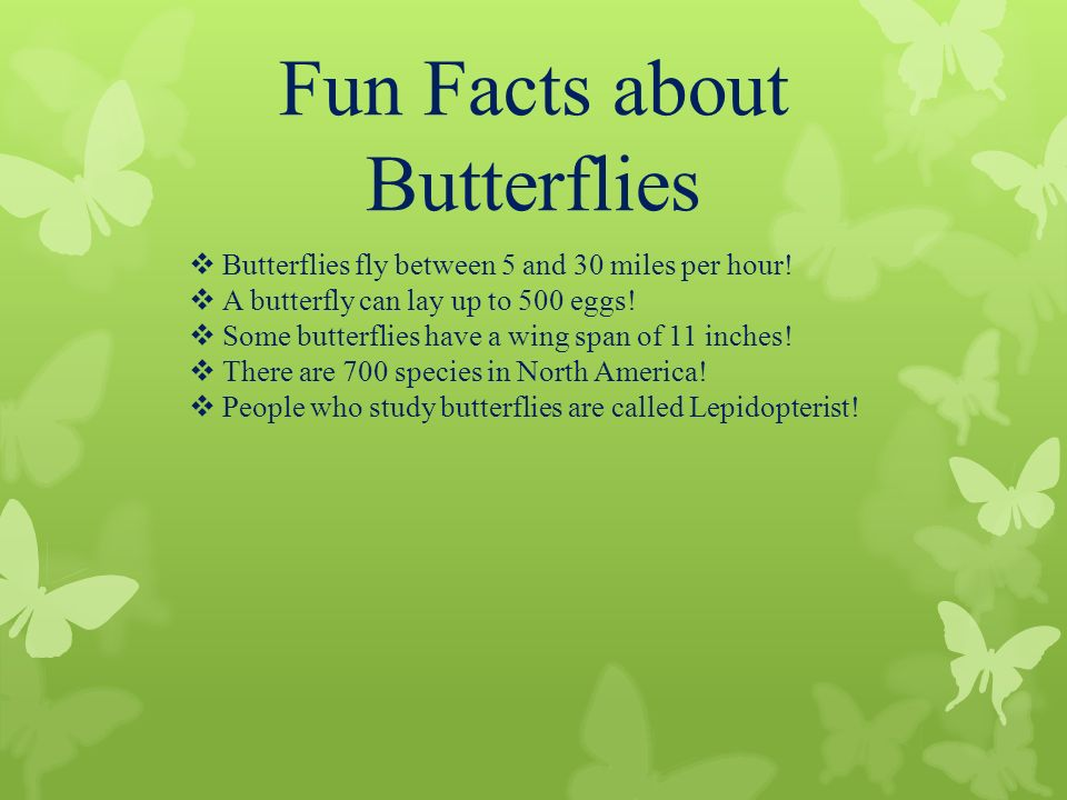 Butterfly life cycle metamorphosis ppt video online for Fun facts about america