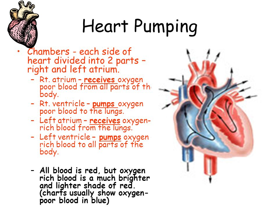 Circulatory system heart blood blood vessels ppt download 3 heart ccuart Images