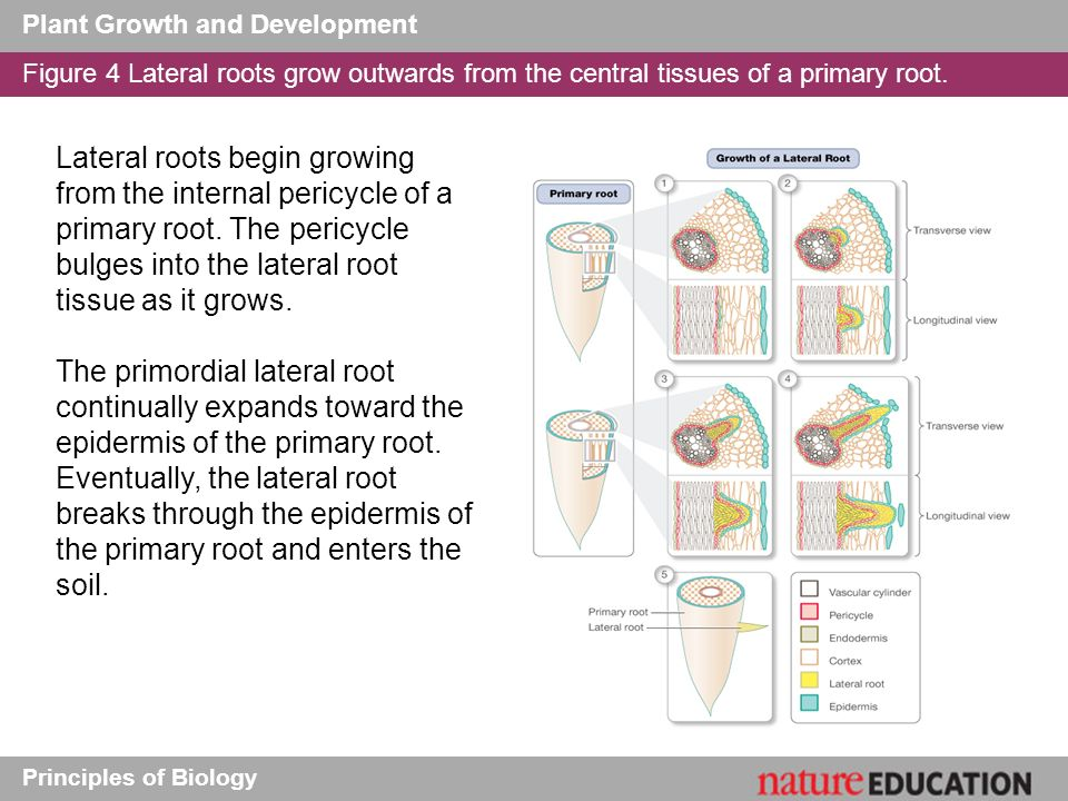 plant growth and development pdf