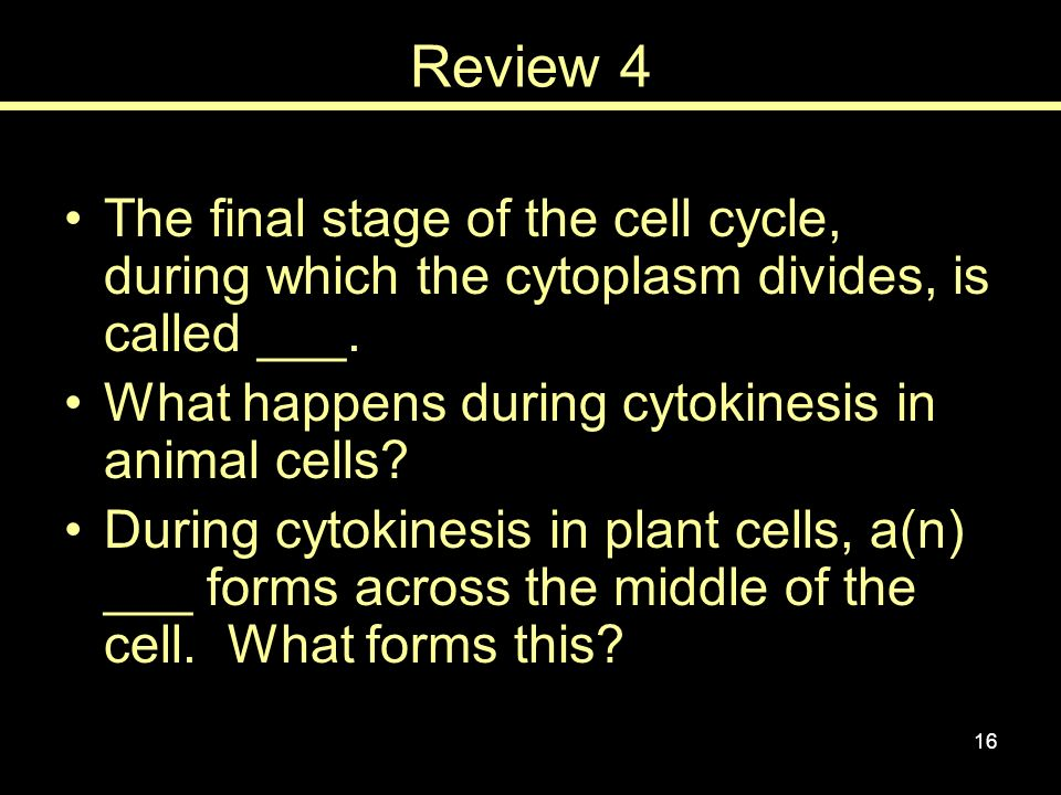 Review 4 The final stage of the cell cycle, during which the cytoplasm divides, is called ___. What happens during cytokinesis in animal cells