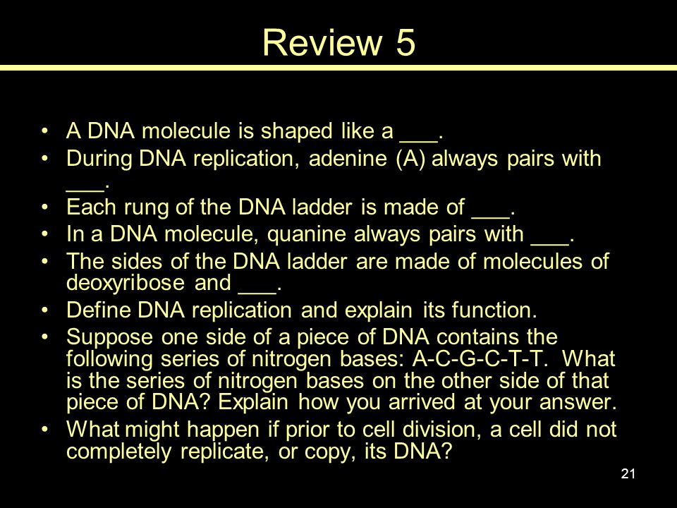 Review 5 A DNA molecule is shaped like a ___.