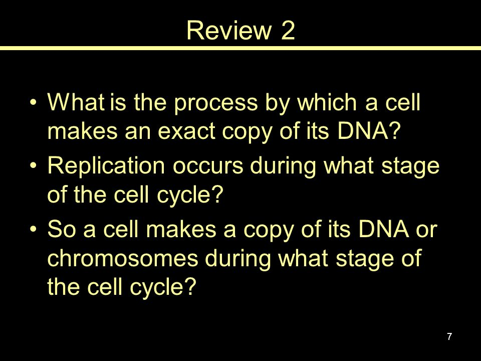 Review 2 What is the process by which a cell makes an exact copy of its DNA Replication occurs during what stage of the cell cycle