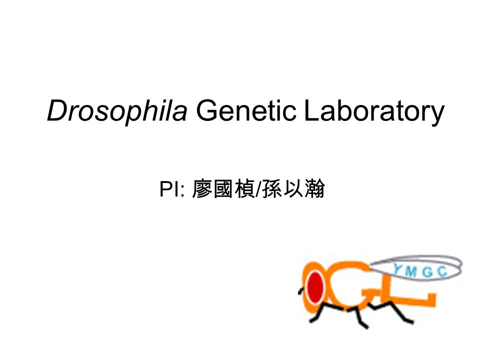 the science of drosophila genetics lab report Lab 4: testing hypotheses about patterns of inheritance modern genetics experiments began with the work of gregor mendel, an austrian monk with an.