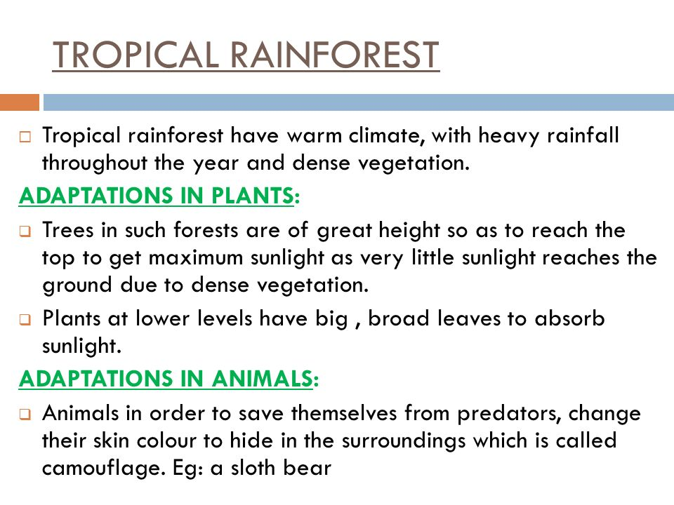 TROPICAL RAINFOREST Tropical rainforest have warm climate, with heavy rainfall throughout the year and dense vegetation.