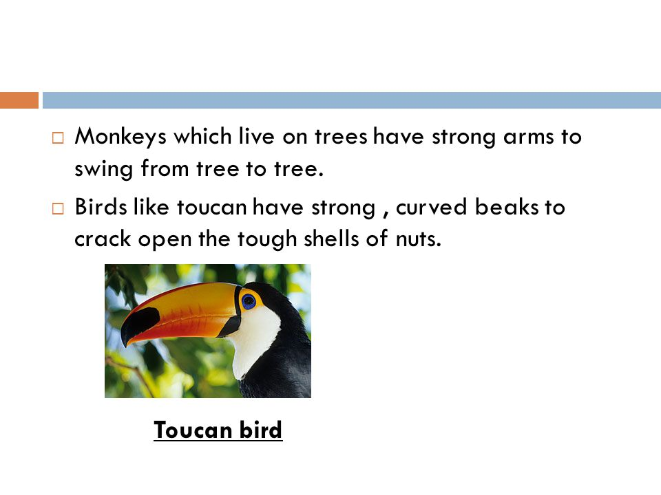 Monkeys which live on trees have strong arms to swing from tree to tree.