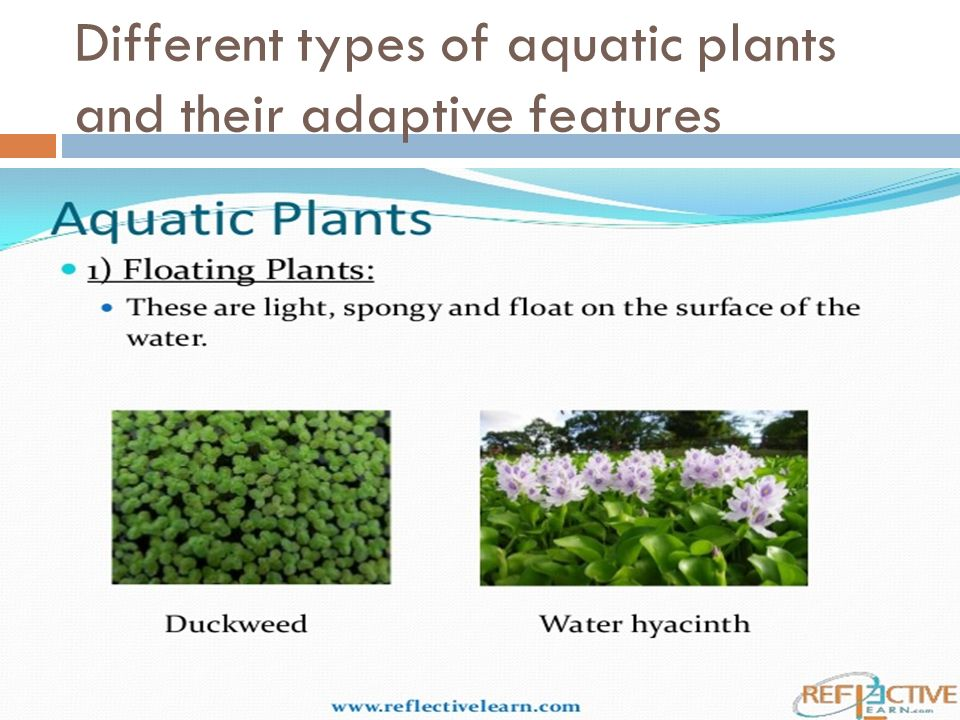 Different types of aquatic plants and their adaptive features