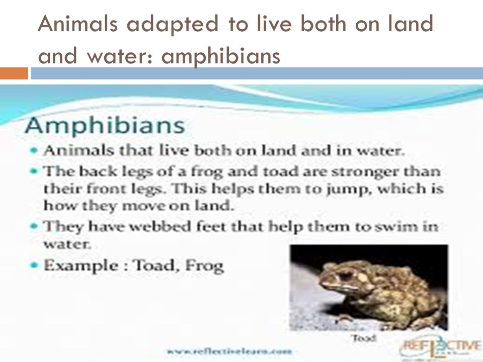 Animals adapted to live both on land and water: amphibians