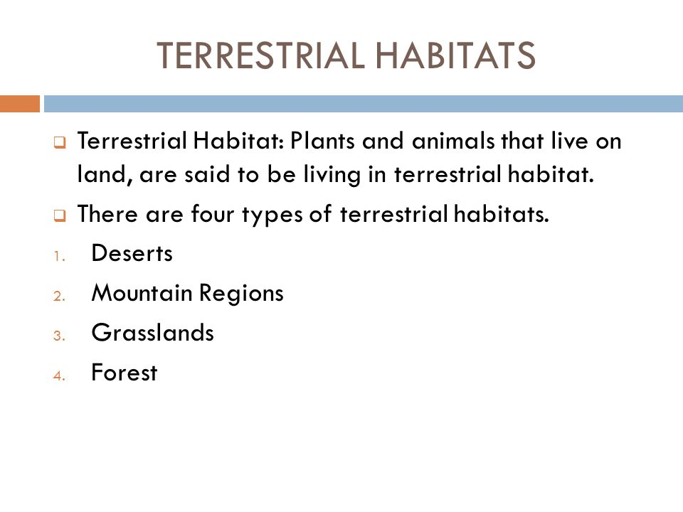 TERRESTRIAL HABITATS Terrestrial Habitat: Plants and animals that live on land, are said to be living in terrestrial habitat.