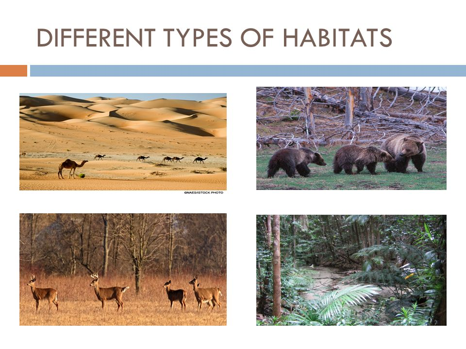 DIFFERENT TYPES OF HABITATS