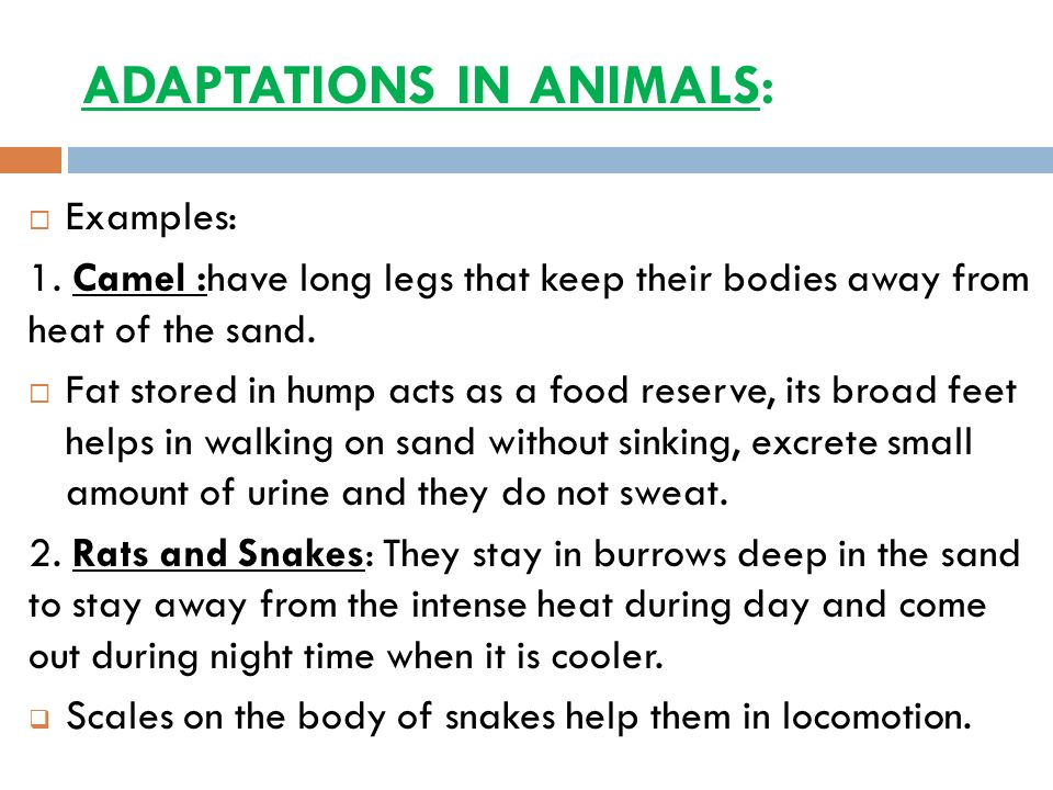 ADAPTATIONS IN ANIMALS: