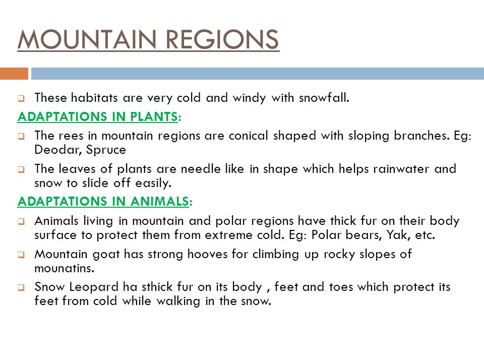 MOUNTAIN REGIONS These habitats are very cold and windy with snowfall.