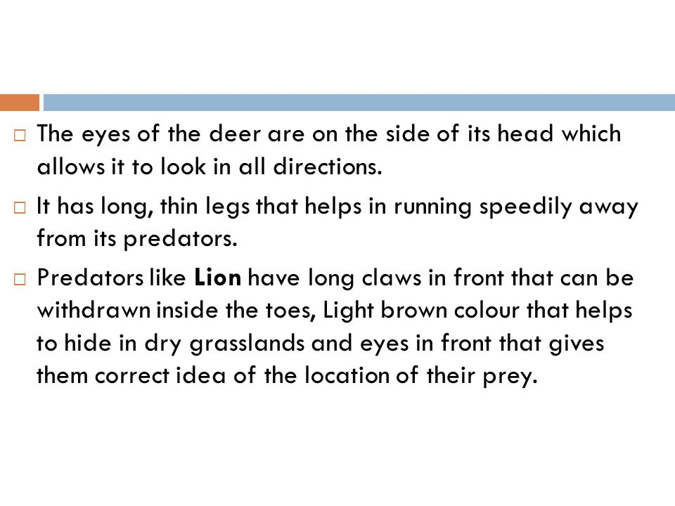 The eyes of the deer are on the side of its head which allows it to look in all directions.