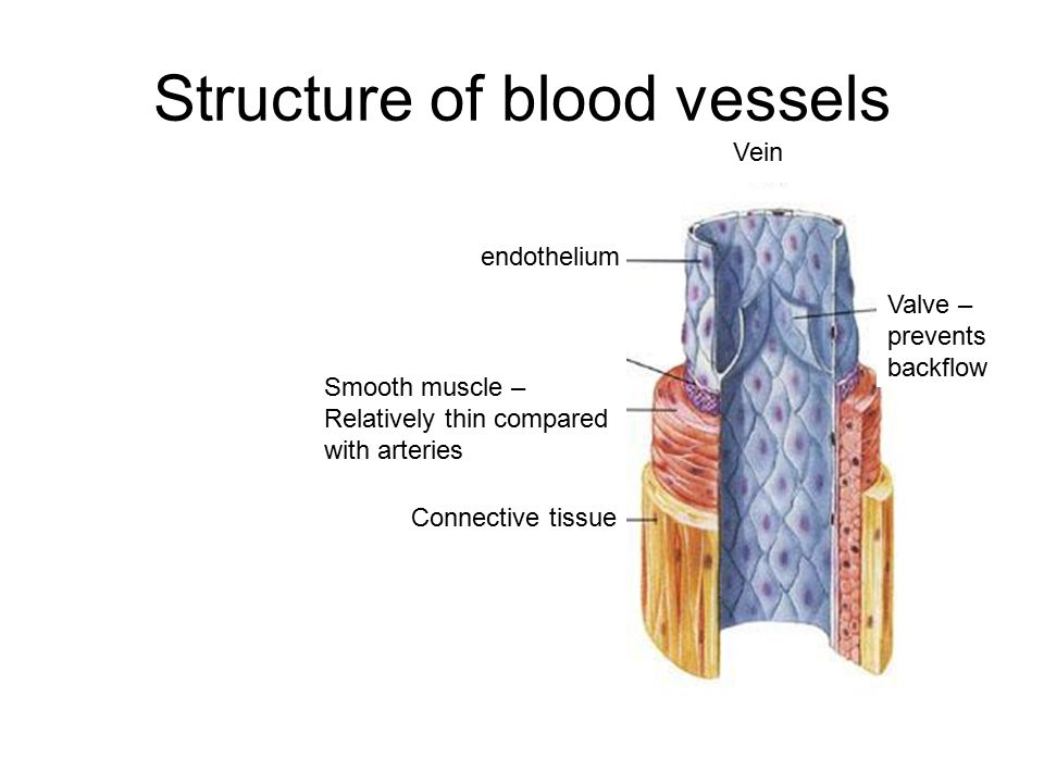 Blood vessels Coursework Academic Writing Service uchomeworkjnkf ...