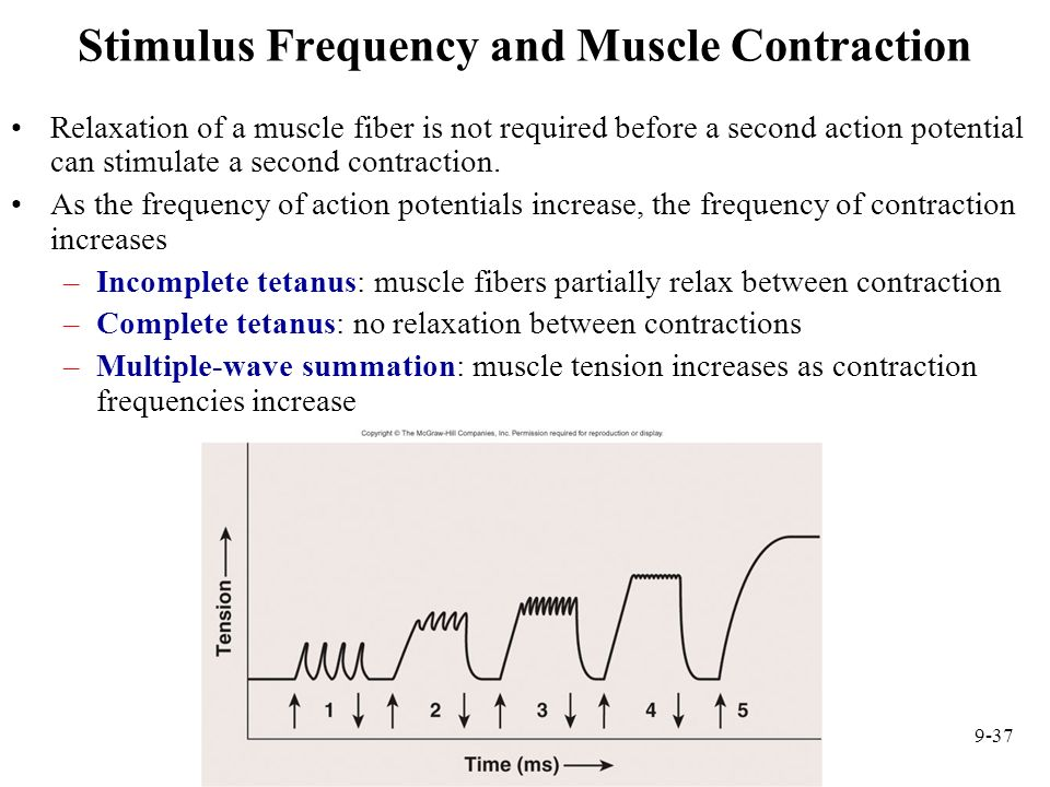 muscle contraction and wave summation Answer to what is the primary function of wave summation 1 prevent muscle fatigue 2 increase muscle tension 3 prevent muscle r.