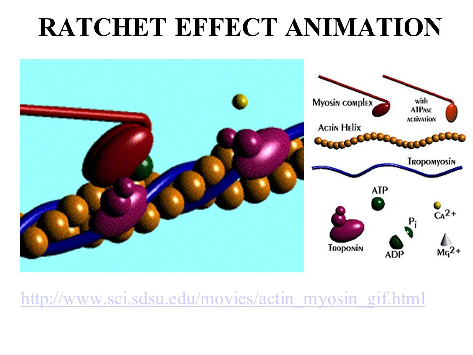 Ratchet effect