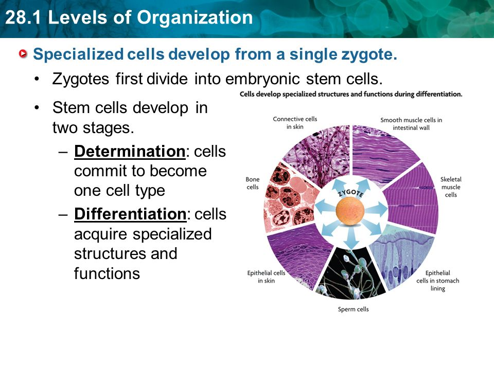 biology unit 1 2 chapter 2 topic level of organisation p42 46