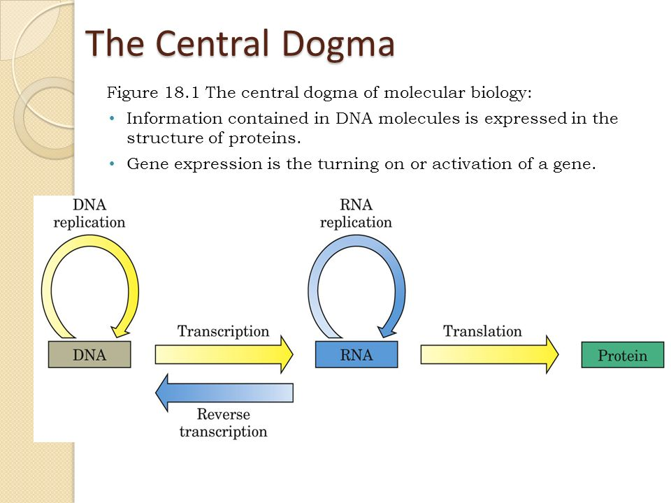 Write an essay on the central dogma of molecular biology