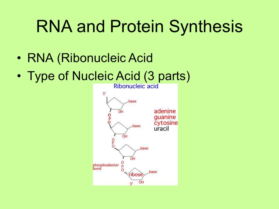 nucleic acids & protein synthesis notes b1
