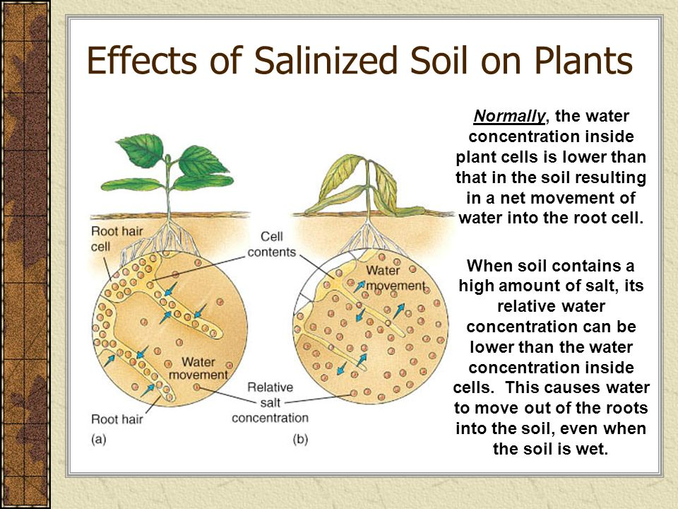 Soil science chapter 14 r b chapter 14 miller ch 21 r for Soil and plant lab