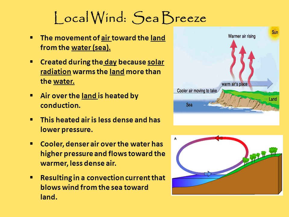 Local Wind: Sea Breeze The movement of air toward the land from the water (sea).