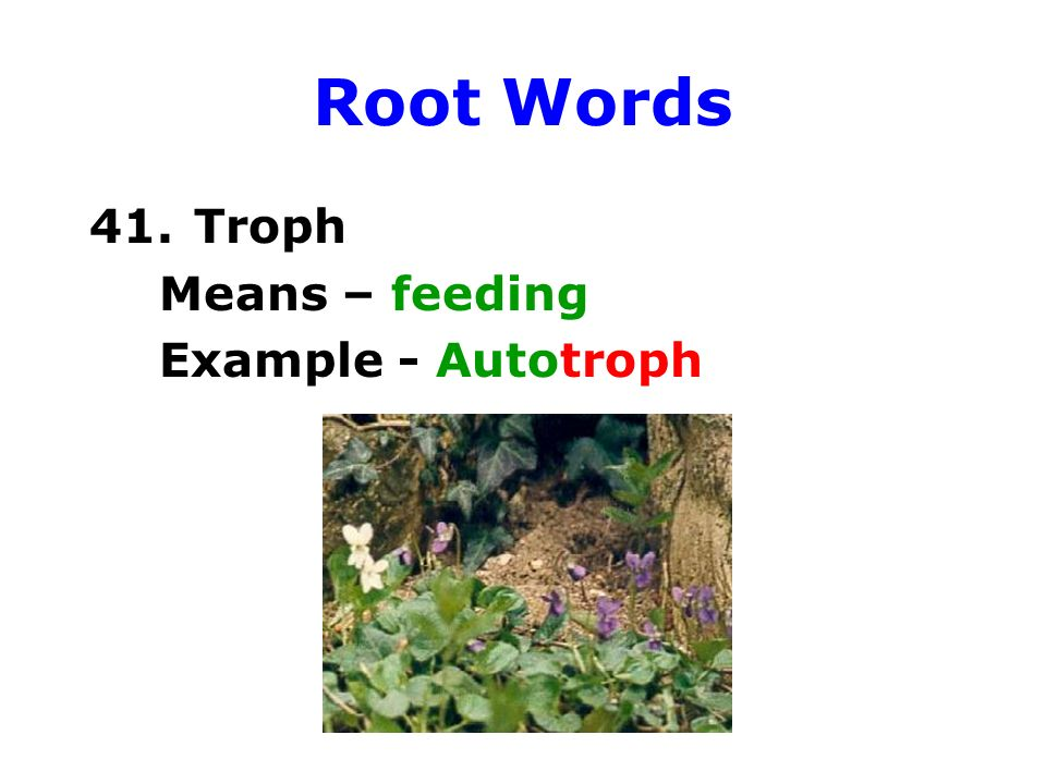 Zoology prefixes, root words, and suffixes - ppt video online download