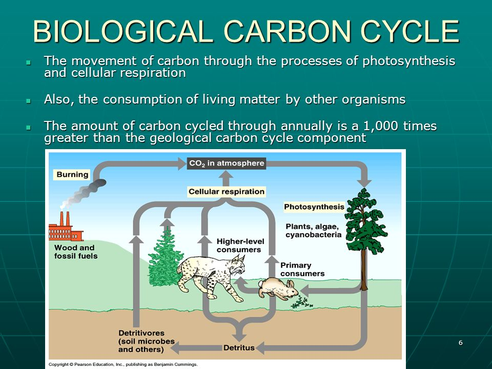 what is the carbon cycle