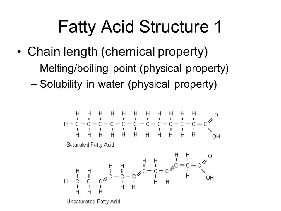 function of fatty acids