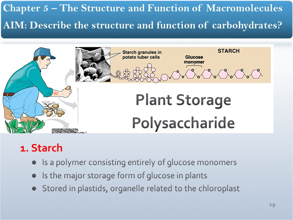 The Structure and Function of Macromolecules - ppt download