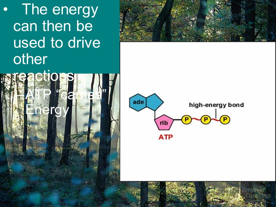 Energy Flow: Photosynthesis & Cellular Respiration - ppt video ...