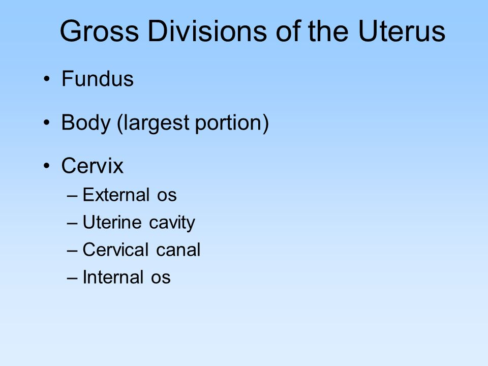 Gross Divisions of the Uterus