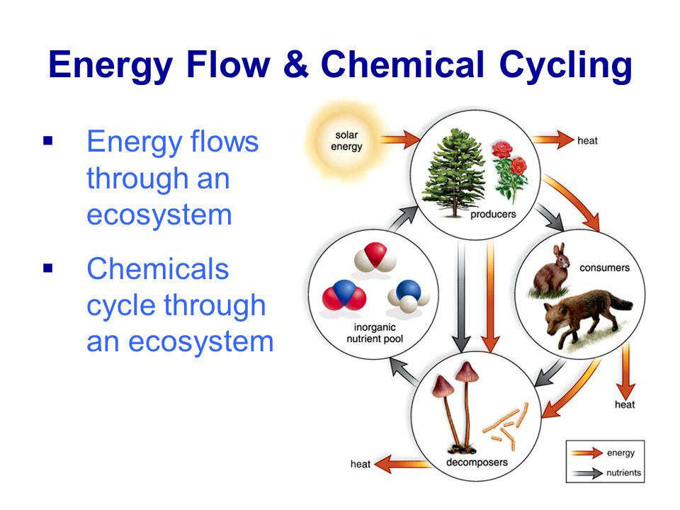 Energy Flow & Chemical Cycling