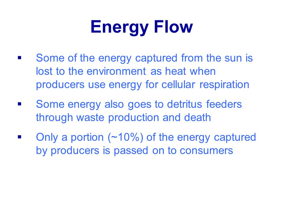 Energy Flow Some of the energy captured from the sun is lost to the environment as heat when producers use energy for cellular respiration.