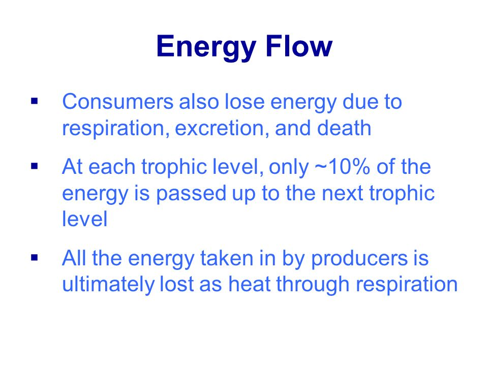Energy Flow Consumers also lose energy due to respiration, excretion, and death.